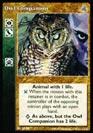 Owl Companion